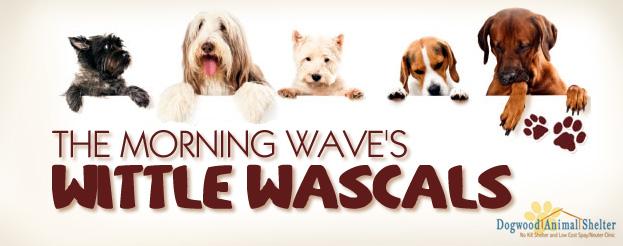 wittle wascals